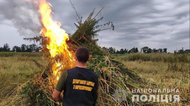Под Константиновкой полицейские сожгли почти 10 миллионов кустов конопли