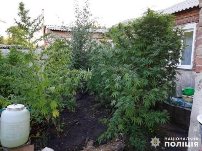 В Константиновке полицейские обнаружили очередного наркоагрария