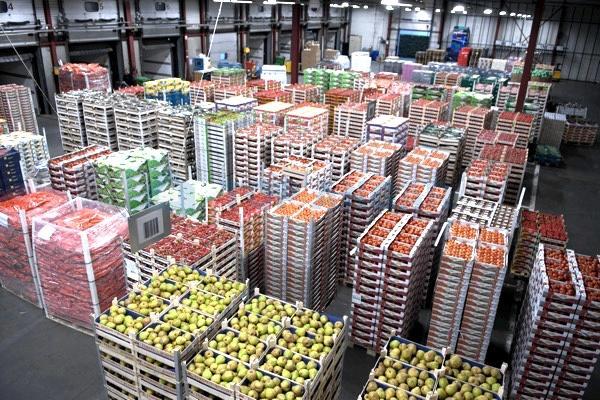 Овощеводы Кубани нуждаются в субсидиях на строительство овощехранилищ