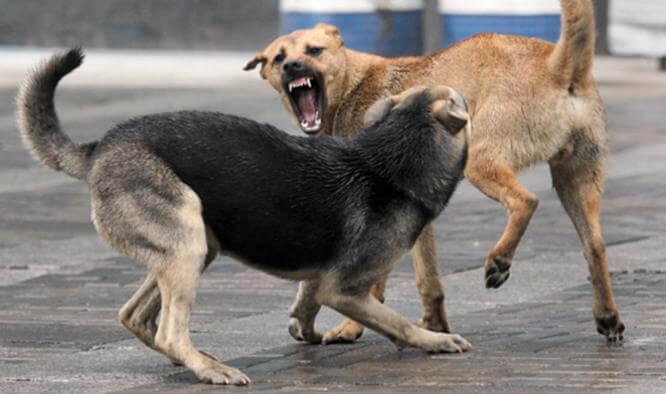 Бродячие собаки в Константиновке
