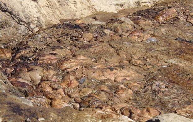 В Константиновке могут построить новый комплекс по переработке отходов