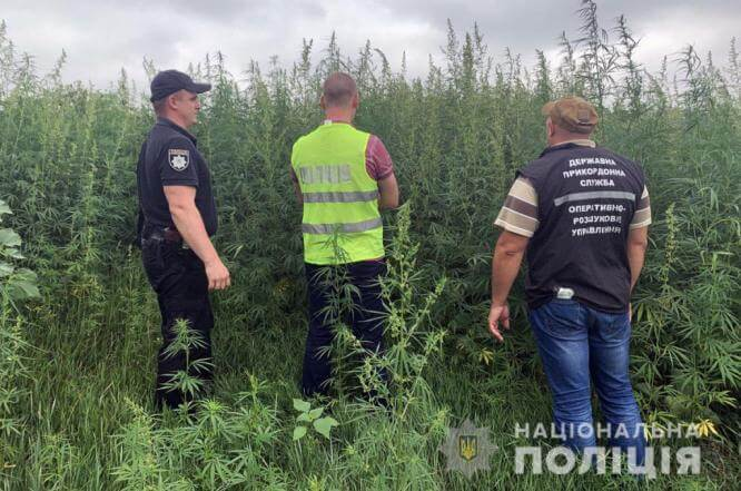 Полицейские Константиновки нашли и сожгли 750 000 кустов конопли