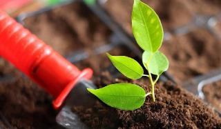 Торф для рассады в качестве материала для подготовки плодотворной почвы