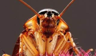 Быстрые и очень быстрые способы борьбы с тараканами