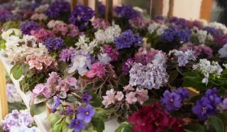 В Константиновке открылась выставка комнатных растений