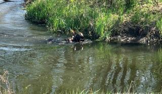 В Константиновке пенсионер застрелил вора и сбросил труп в реку