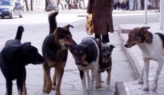 Бездомные собаки в Константиновке