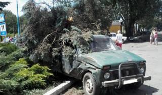 В Константиновке автомобиль снес елку, которая росла у городского совета