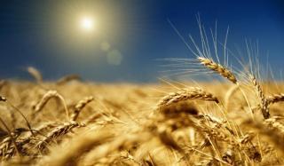 Зерно в Константиновке